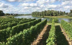 Weingut Aldeneyck Belgien